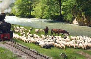 Waldbahn Viseu_Foto_KarpatenTurism