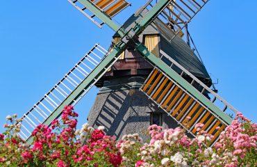 Windmühle Foto: DolfiAm/pixabay.de